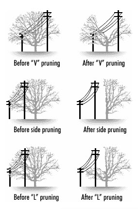 Tree_Trimming_Shapes