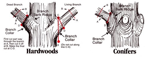Tree Branch Pruning Tips