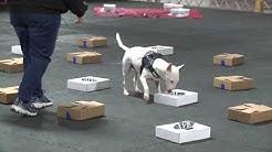 Explore Richland 4 Paws Dog Training Facility with white dog